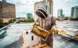 MFA-rooftop-beehive-credit-Allison-Lynn-Photography-copy_1024x640