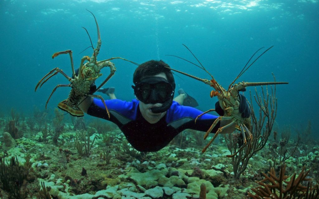 Dive into Florida's Spiny Lobster Season