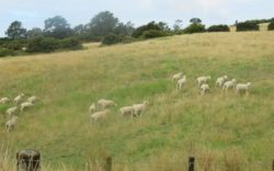 Farm_cape_kidnappers