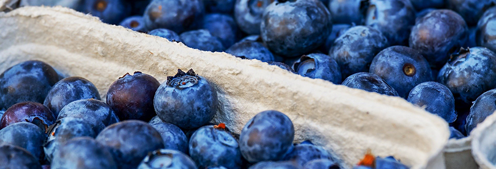 blueberries-3474854_1024x640