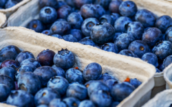 blueberries-3474854_1024x640