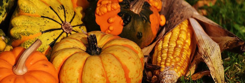 pumpkins-1708782_1920 1024x640