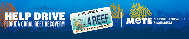 mote - protect our reefs npr the zest