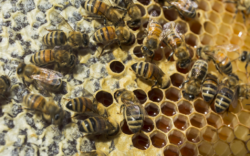 1024x640_bee hive - credit Christy Oshana