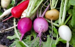 1024x640_lead photo - colorful veggies